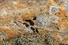 Texturer och modeller bildade vid laven och svampen på stenar arkivfoton