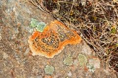 Texturer och modeller bildade vid laven och svampen på stenar arkivbilder