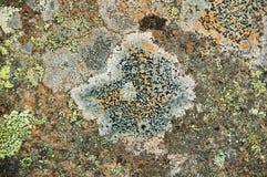 Texturer och modeller som skapas av svampen på stenar royaltyfri foto