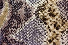 Texturer - Snakeskin Arkivfoton