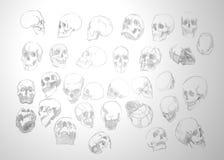 Texturera anatomiska mänskliga skallar på en grå bakgrund Fotografering för Bildbyråer