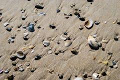 Texturera av beskjuter på sandig strand Arkivfoto