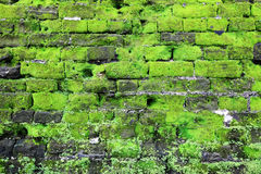 Gammal stenvägg med grön moss Royaltyfri Fotografi
