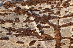 Texturera av den naturliga stenen Royaltyfri Fotografi