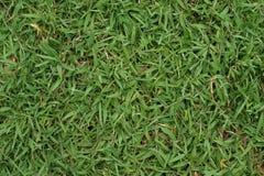 Texturera av gräs Fotografering för Bildbyråer