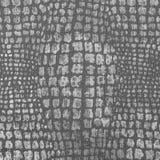 Texturera av krokodil flår Royaltyfri Bild