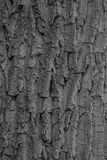 Texturera av treeskäll Arkivfoton