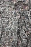 Texturera av treeskäll Royaltyfri Bild