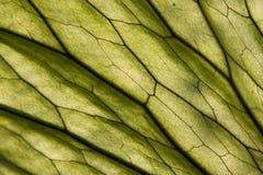 Texturera bakgrund Royaltyfri Fotografi