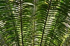 Texturera effekt av palmträdsidor royaltyfria bilder