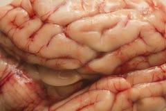 Texturera hjärnan royaltyfri fotografi