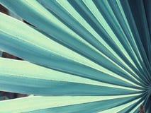 Texturera och modellen av ett grönt blad, tappningstil Royaltyfria Foton