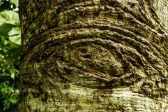 Texturera på tree Royaltyfria Bilder