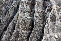 Texturera tapeten av gammalt åldrigt mörkt grått massivt vaggar med mossalappar arkivfoto