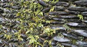 Texturera väggen av stenen royaltyfria foton