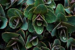 Texturera växten med vattensmå droppar arkivbilder