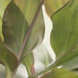 texturerad abstrakt leaf Royaltyfri Foto