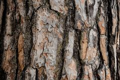 Texturerad bakgrund av ett beautifully utsmyckat trädskäll i höstskogen royaltyfri bild