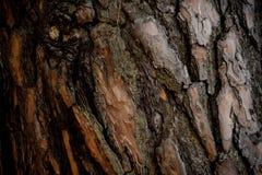Texturerad bakgrund av ett naturligt utsmyckat brunt trädskäll i höstskogen arkivfoton