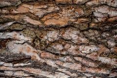 Texturerad bakgrund av ett naturligt utsmyckat trädskäll i höstskogen arkivbilder