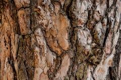 Texturerad bakgrund av ett utsmyckat trädskäll i höstskogen fotografering för bildbyråer