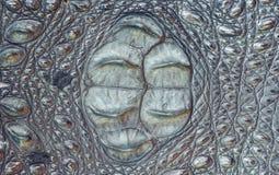 Texturerad bakgrund för krokodil läder Arkivbilder