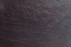 Texturerad bakgrund för krokodil läder Arkivfoton