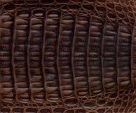 Texturerad bakgrund för krokodil läder Arkivfoto