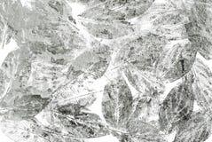 Texturerad bakgrund med leafprints Fotografering för Bildbyråer