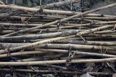 Texturerad bambu Royaltyfri Fotografi