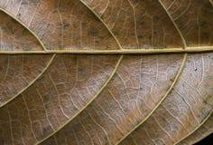 Texturerad bladcloseup Foto för makro för höstbladtextur Gul bladådermodell Arkivfoto