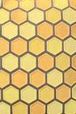 Texturerad honunghårkamdesign Arkivbild