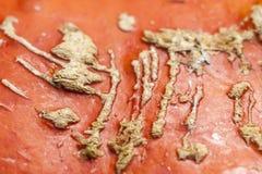 Texturerad hud, scarification, bladåder, pumpa, peel, apelsin, Royaltyfri Bild