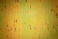 Texturerad modell av bananbladet Royaltyfri Fotografi