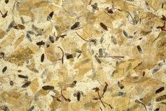 Texturerad mullbärsträdpappersnärbild arkivfoto