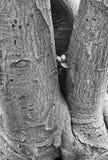 Texturerad och Gnerled trädstam arkivbild