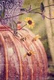 Texturerad stilleben av nedgångträdgårdkrukan & blommor Royaltyfria Bilder