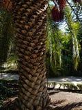 Texturerad trädstam i Madrid Spanien royaltyfri fotografi
