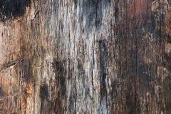 Texturerad träyttersida, detaljerad bakgrund Royaltyfria Bilder