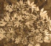texturerad wallpaper för tusensköna sepia Royaltyfri Fotografi