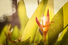 Texturerade blom- bakgrunder från en trädgård i Mexico Royaltyfri Foto