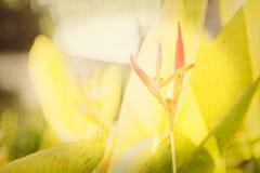 Texturerade blom- bakgrunder från en trädgård i Mexico Arkivbild