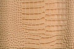 texturerade wallpapers för bakgrundsefterföljdreptil set hud Royaltyfri Fotografi