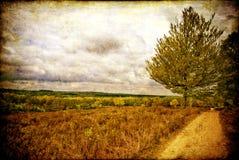 texturerat fält Fotografering för Bildbyråer