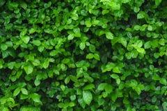 Texturerat grönt blad Royaltyfri Fotografi