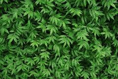 Texturerat grönt gräs, abstrakt bakgrund för grönska Arkivfoton