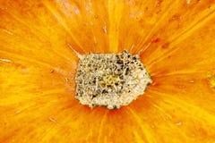 Texturerat hud, pumpa, peel, prickigt som är orange, bakgrund, autu Royaltyfri Fotografi