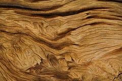 texturerat trä Royaltyfri Bild
