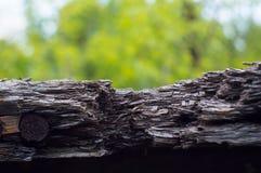 Texturerat trä Arkivbild