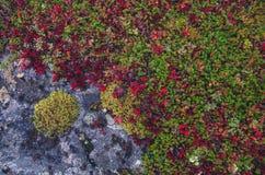 Textures colorées de mousse Photographie stock libre de droits
